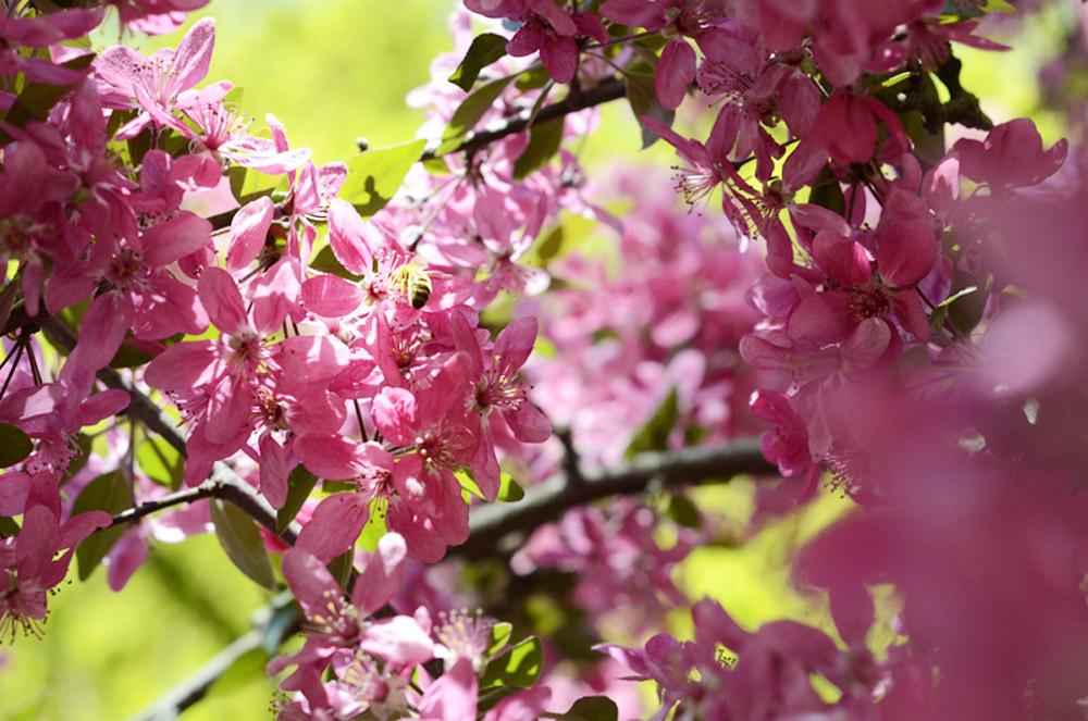 Comment aider les abeilles ? - Sois écolo et glamour, sois Green Glam - Clémentine la Mandarine