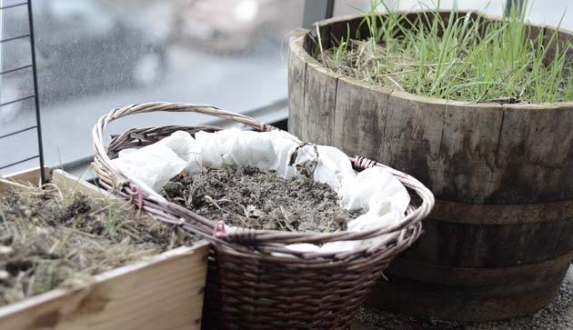 Contenants à récupérer pour planter des fleurs écologiquement