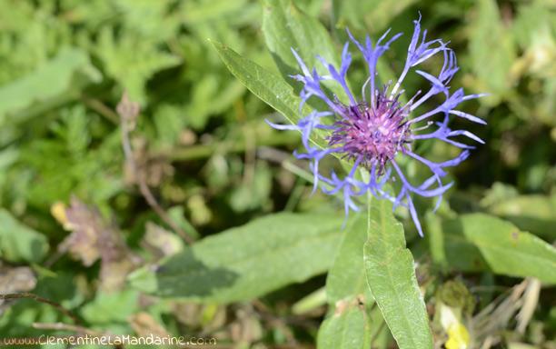 Inspiration et douceur : fleurs de montagne