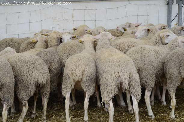 Devenir végane : je ne porterai plus de laine