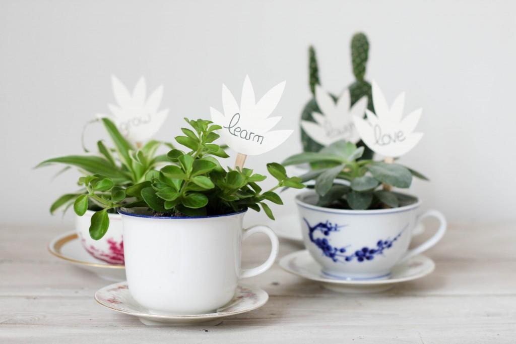 plante grasse dans une tasse DIY