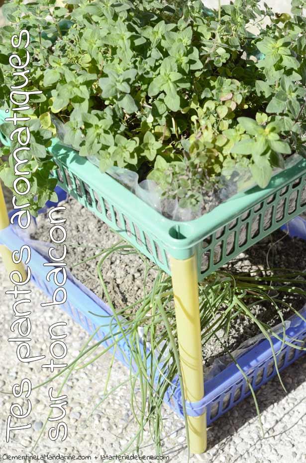 8-plantes-aromatiques-sur-balcon-clementine-la-mandarine