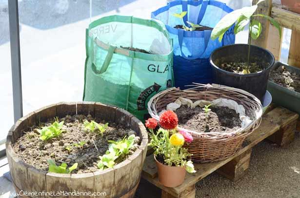 contenant-pot-recup-pour-jardiner-sur-un-balcon-clementine-la-mandarine