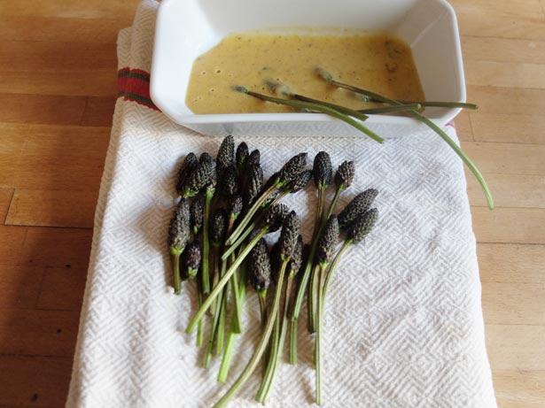 cueillette-plantes-sauvages-comestibles