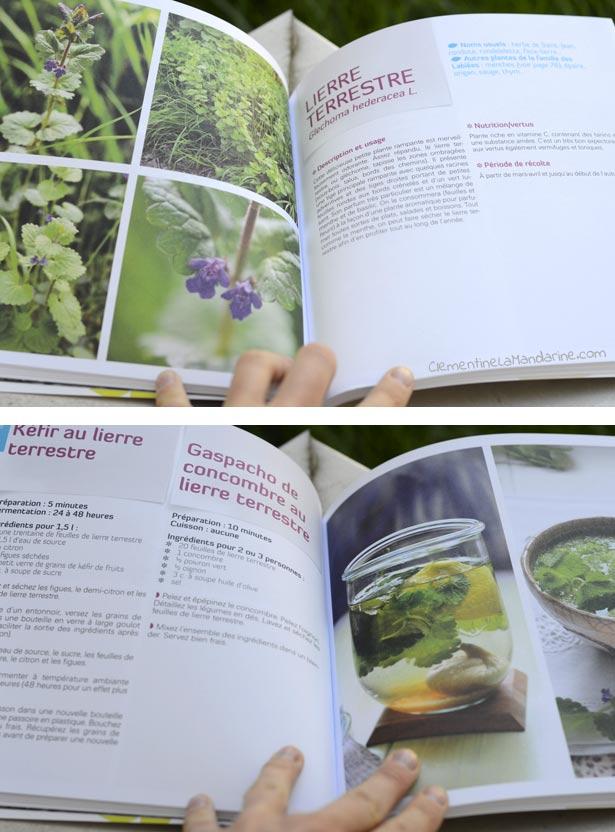 Je cuisine les plantes sauvages | Clémentine la Mandarine