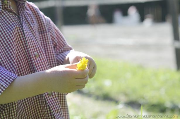 cueillir-bouquets-de-fleurs-sauvages-temps-nature-avec-les-enfants-clementine-la-mandarine