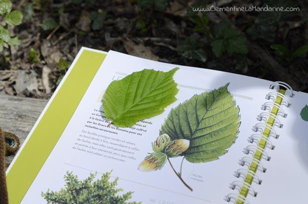 herbier-de-feuilles-d-arbres-avec-enfants-clementine-la-mandarine