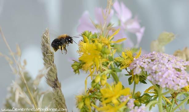 polenisateur-fleurs-des-champs-bouquet-champetre-clementine-la-mandarine
