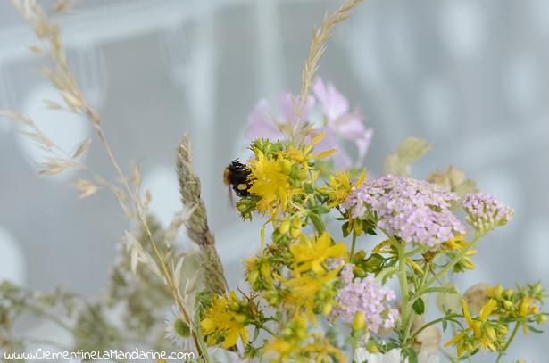 polenisateurs-sur-le-balcon-fleurs-des-champs-clementine-la-mandarine