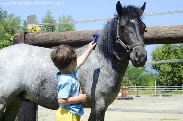 prendre-soin-d-un-poney-pendant-l-ete-clementine-la-mandarine