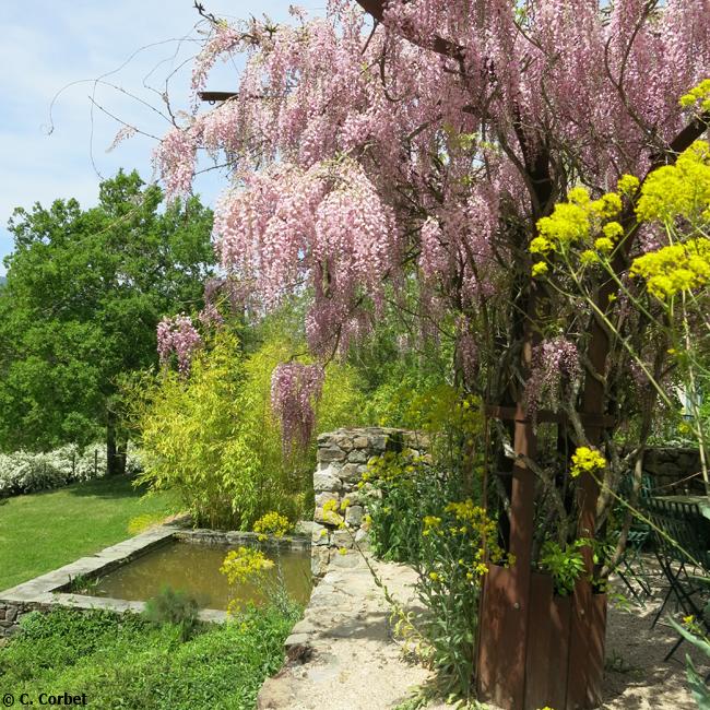 05-© Christine Corbet - Glycine et jardin de l'eau