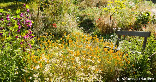 Terre vivante : un beau jardin, au fil des saisons