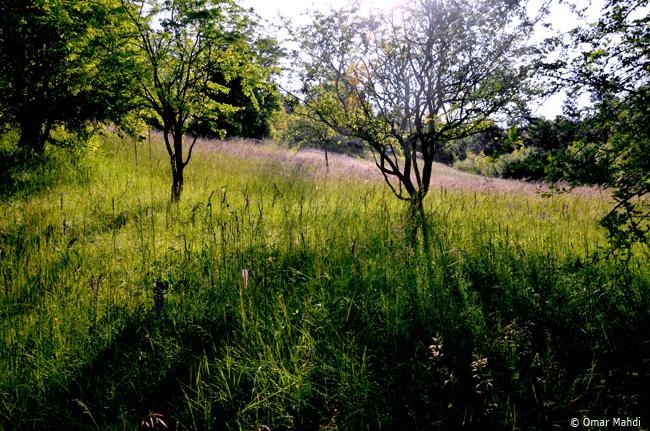 06-© Omar Mahdi - Rosée dans les prés un matin de juin