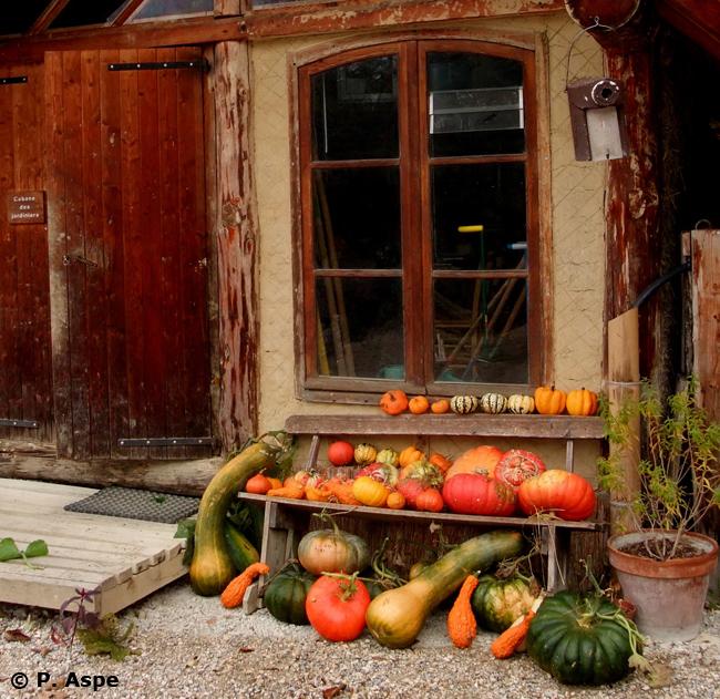 10-© Pascal Aspe - Récoltes des courges