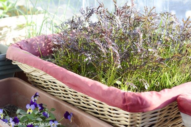 box-graine-jardinage-urbain