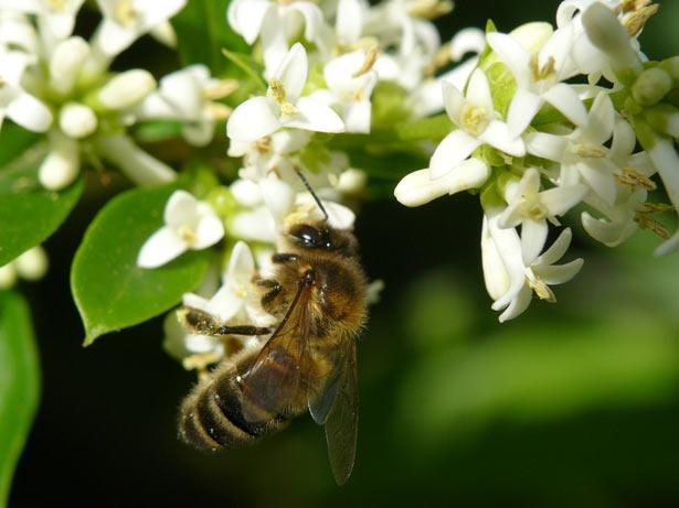 J-6 – Un toit pour les abeilles