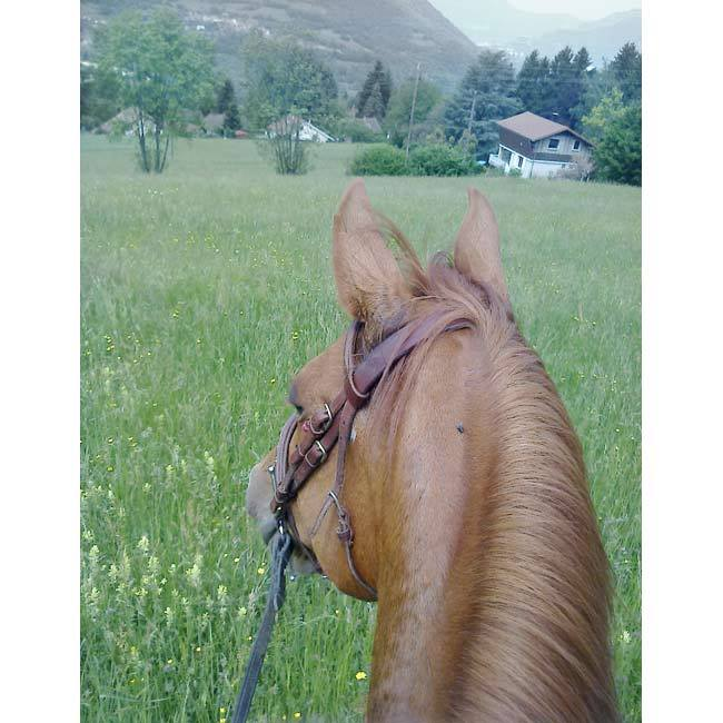balade cheval profiter paysage clementine la mandarnie