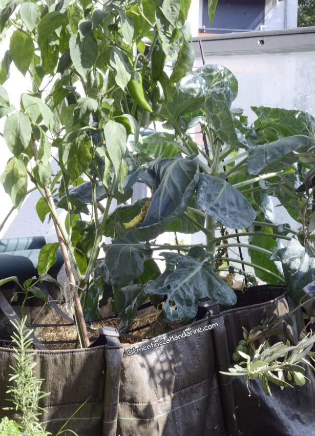 Un été de jardinage sur le balcon, bilan #2 : livres, bacs et graines