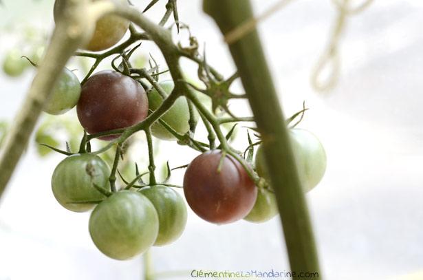 jardiner-bio-sur-balcon-clementine-la-mandarine