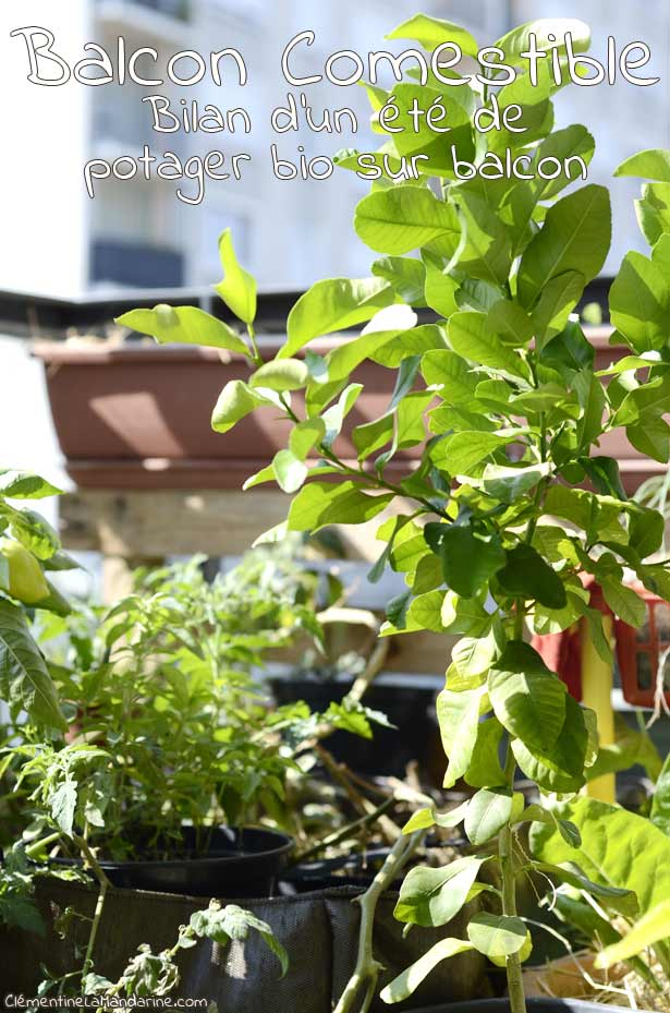 un-ete-potager-bio-sur-balcon-clementine-la-mandarine