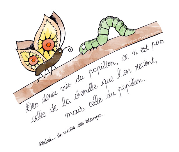 citation-positive-papillon-615-clementine-la-mandarine