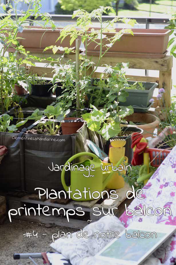 plan-balcon-plantations-clementine-la-mandarine