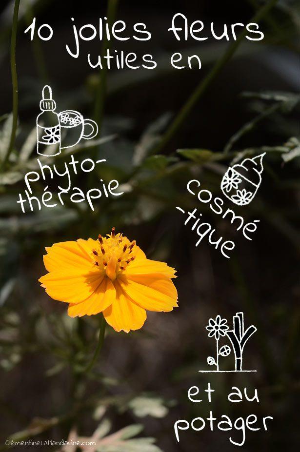 fleur-cosmetique-naturelle-phytotherapie-clementine-la-mandarine