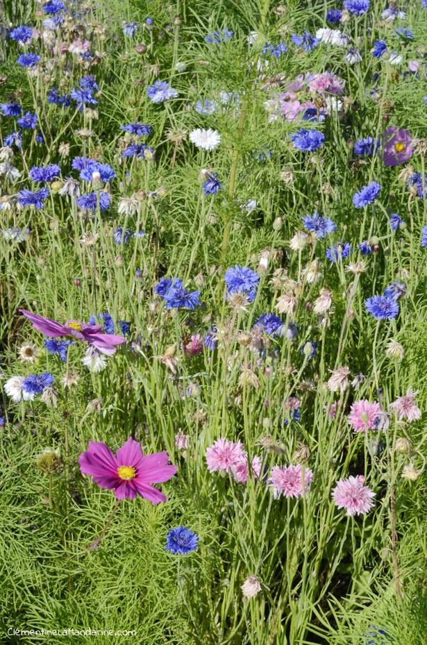 10 fleurs jolies et utiles à semer