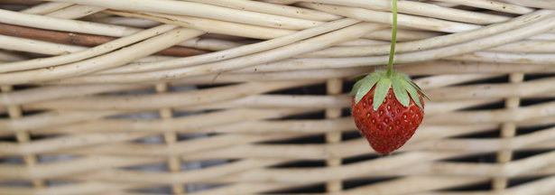 Permaculture sur balcon #1