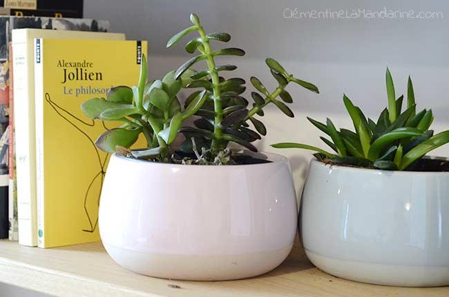 Comment s'occuper de ses plantes d'intérieur écologiquement ?