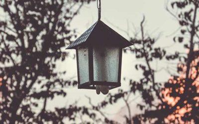 Les ampoules LED pour un éclairage écolo ?